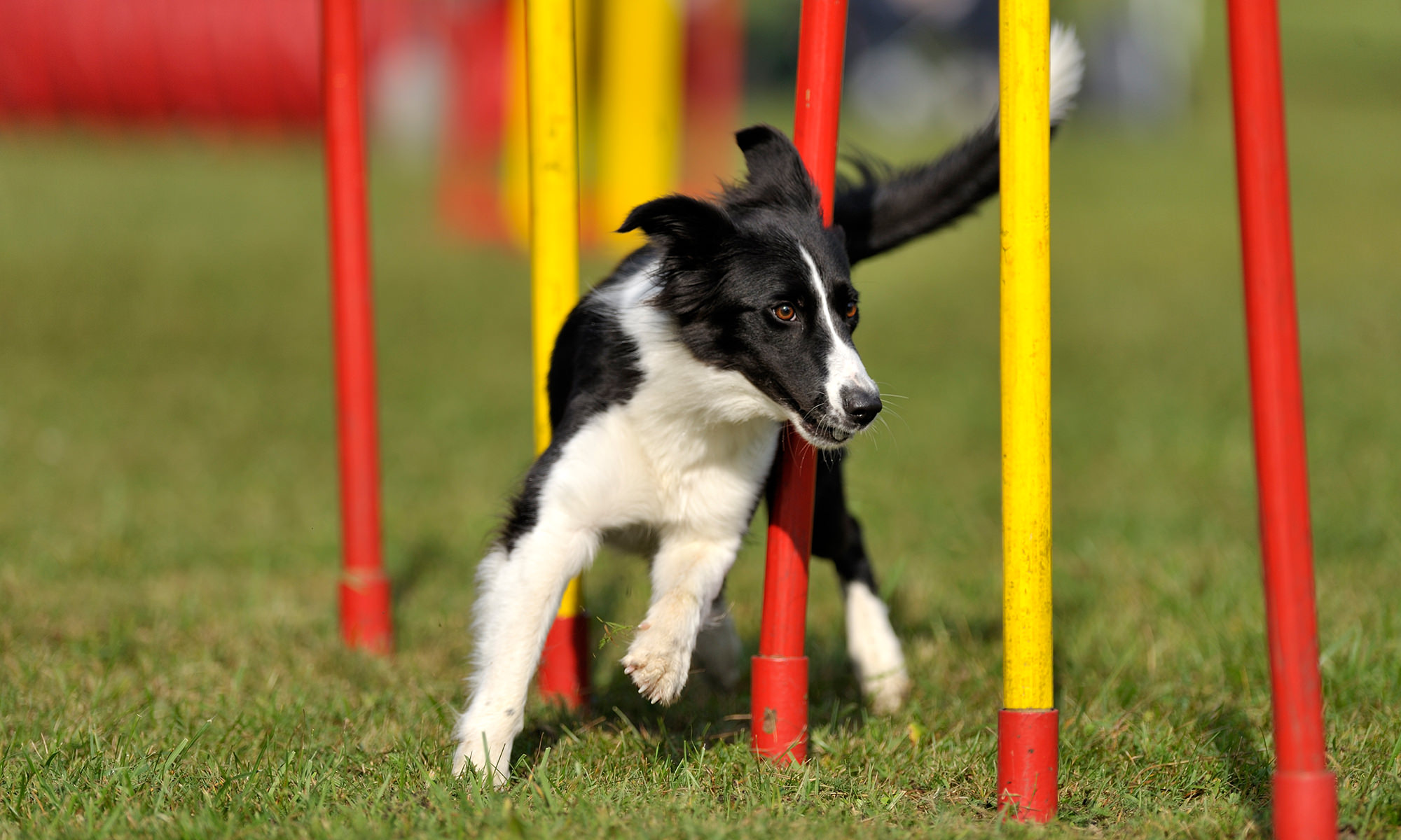 DIY Backyard Playground Ideas for your Dog
