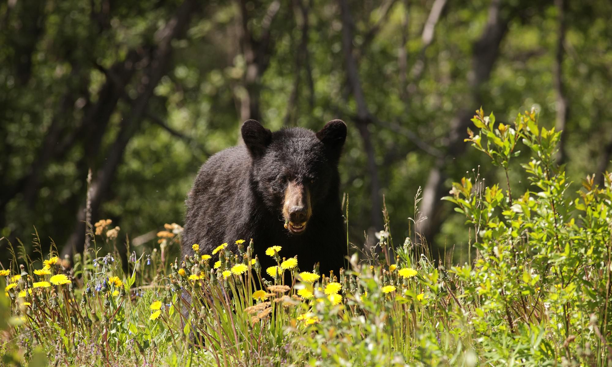 How to Stay Safe While Camping in Black Bear Country